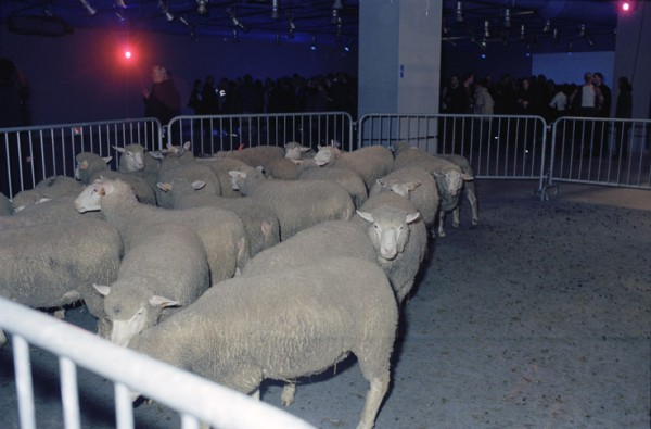 Claude Lévêque Strangers in the night, 19 novembre 2000 Performance, soirée d'inauguration de l'exposition Au delà du spectacle, Centre Georges Pompidou, Paris. 3 enclos en barrières de sécurité, projecteurs, 67 moutons, DJ programmant une sélection de chanson de crooners, buffet. Conception sonore en collaboration avec Frédéric Sourice. Photo Jean-Claude Planchet. © ADAGP Claude Lévêque.  Courtesy the artist and kamel mennour, Paris