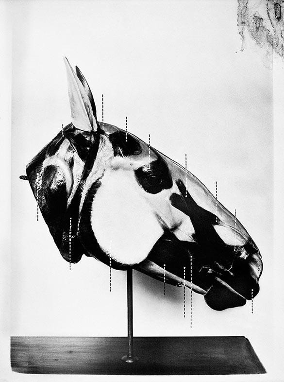 Sofia Borges, La Tête du Cheval, 2012. Impression à jet d'encre sur papier coton, 200 × 150 cm. Courtesy Galeria Millan, São Paulo.