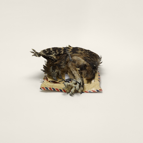 Taryn Simon, Cadavre d'oiseau, étiqueté « décor d'intérieur », Indonésie à Miami, Floride (interdit). Détail de cadavres d'animaux (interdits), membres d'animaux (interdits), squelettes d'animaux (interdits), animaux empaillés (interdits), papillons (interdits), escargots (interdits). 15 tirages jet d'encre dans 6 boîtes en plexiglas. Courtesy Taryn Simon © 2014 Taryn Simon